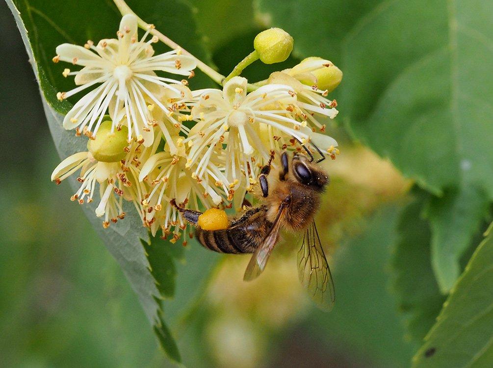 rychlost včelcentrální maine power hook up